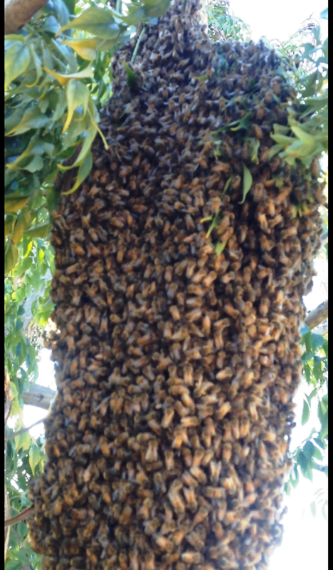 swarm 2 email.png
