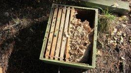 wasps in super.jpg
