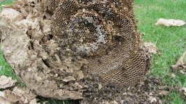 wasps 3.jpg