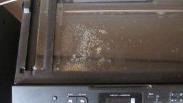 Ants in printer.jpg
